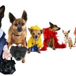 Quiz: What Classic Halloween Costume Should Your Pet Wear?