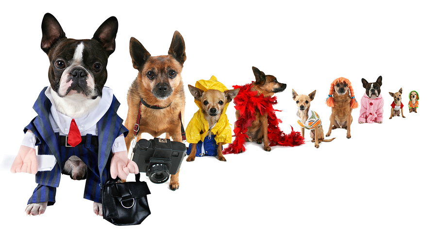 a spoof on business images but with dogs