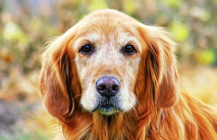 veterinary euthanasia season