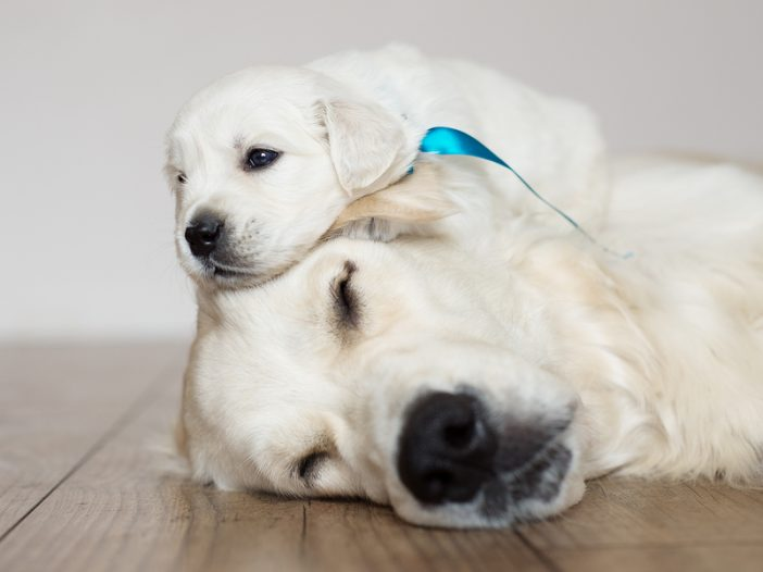 mother dog and puppy