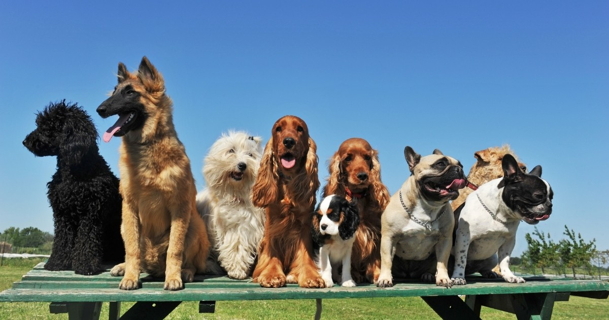 different breed dogs sitting on picnic table