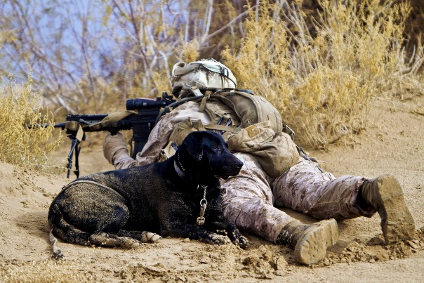 120217-M-PH863-006 U.S. Marine Corps Lance Cpl. Brandon Mann uses his automatic rifle's scope to scan the area while providing security with his military working dog, Ty, around the villages of Sre Kala and Paygel in Helmand province, Afghanistan, on Feb. 17, 2012.  Mann, a military working dog handler, and Ty, an improvised explosive device detection dog, are assigned to Alpha Company, 1st Light Armored Reconnaissance Battalion.  DoD photo by Cpl. Alfred V. Lopez, U.S. Marine Corps.  (Released)