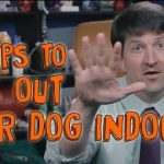5 Tips for Tiring Out Your Dog Indoors
