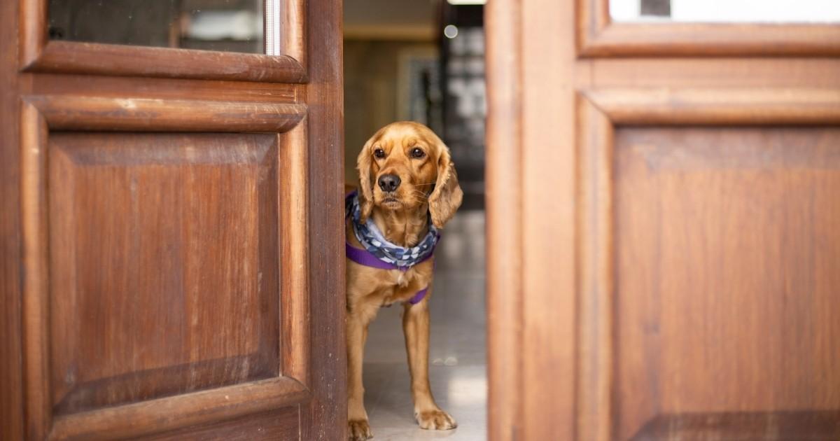 dog peeking through open veterinary clinic doors